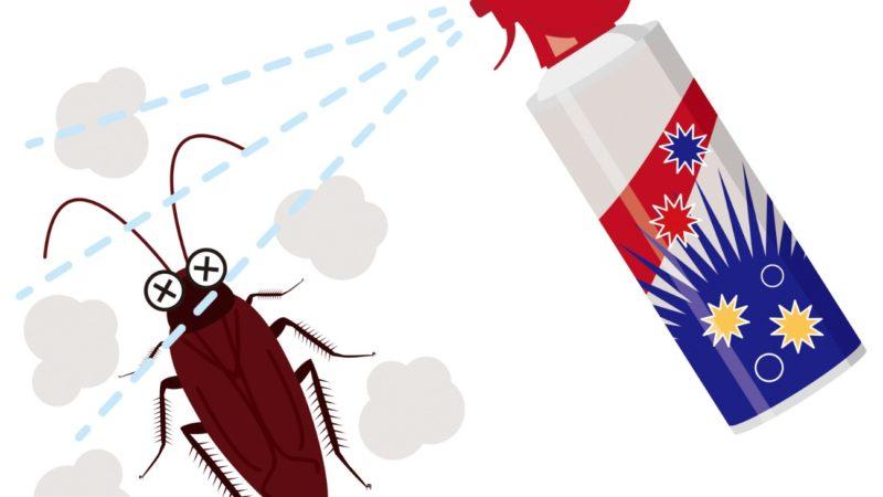 家で簡単にできるゴキブリ駆除の方法とは?日常対策から時期別の対策まで紹介!