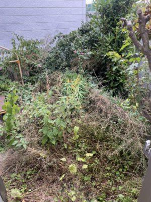 【草むしり】一軒家の草むしりを行いました!お困り事なら八尾市の便利屋何でもワークスへ!