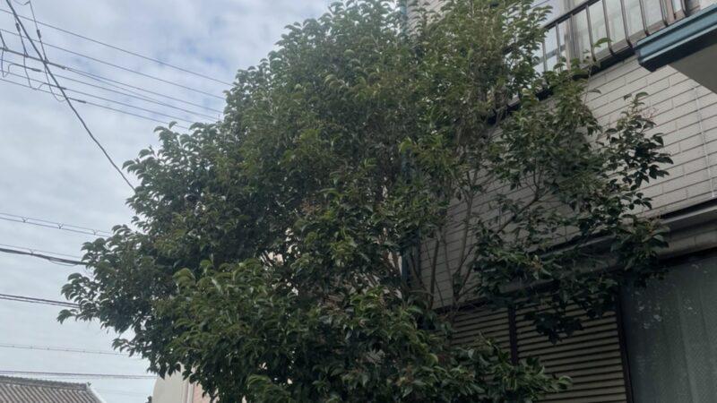 【剪定】一軒家軒先の枝剪定を行いました!